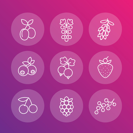 whortleberry: Berries linear icons, raspberry, blueberry, cherry, grape, strawberry, barberry, plums