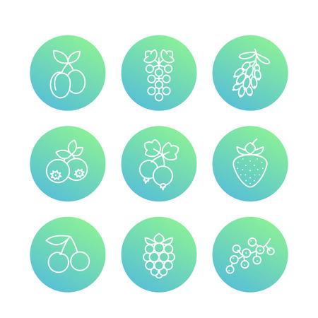 whortleberry: Berries line icons, raspberry, blueberry, cherry, grape, barberry, plums, strawberry, currant Illustration