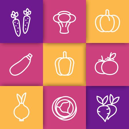 courgette: Vegetables line icons, carrot, broccoli, courgette, pumpkin, cabbage, zucchini, tomato, onion, vector illustration