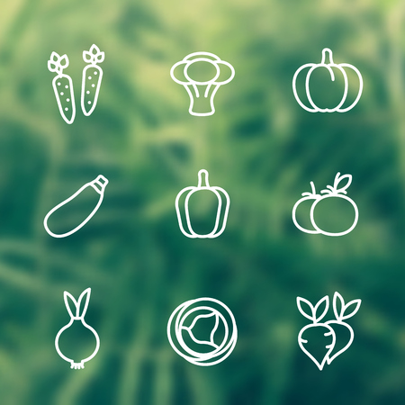 Vegetables line icons set, carrot, broccoli, pumpkin, courgette, pepper, cabbage, beet, onion