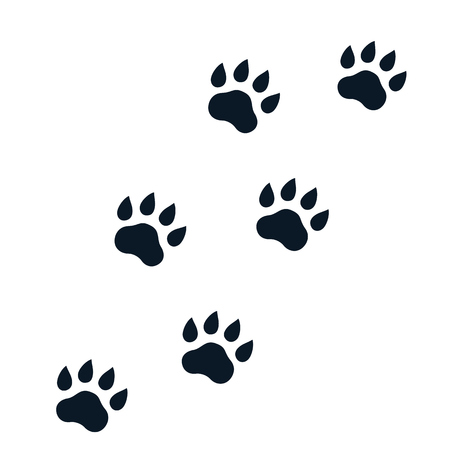 paw footprints on white