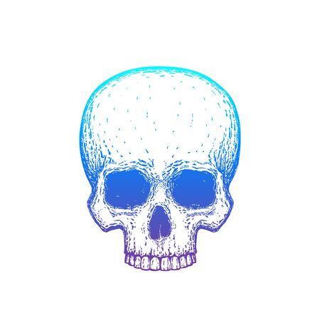 Human skull with gradient, vector illustration
