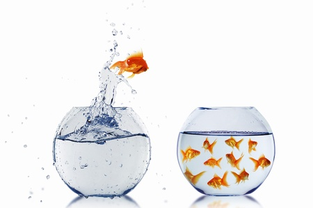 gold fish jumping out of water in fishbowl Stock Photo - 12561698