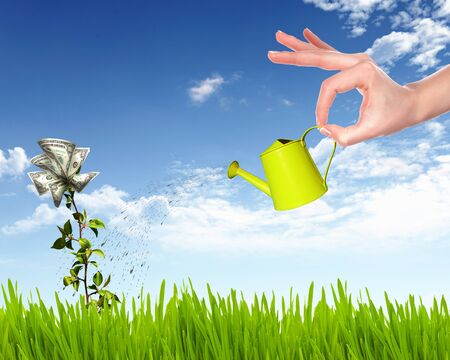 Human hand with a pot watering growing money tree Stock Photo - 12561316