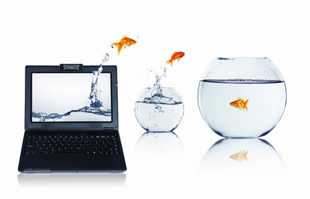 picture of gold fish and laptop computer photo