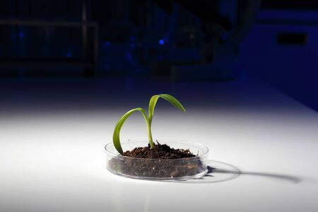Small green plant and soil on the table photo