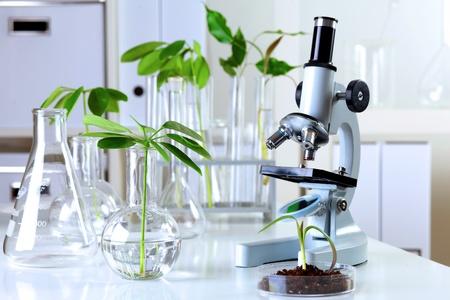 microscopio: Las plantas verdes y equipo cient�fico en la biolog�a laborotary