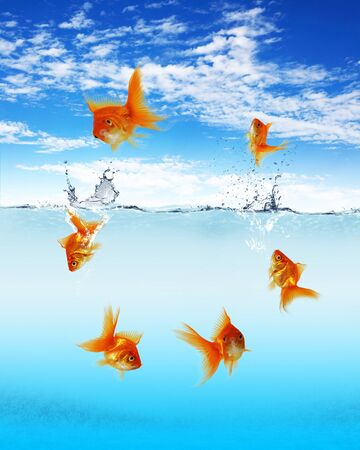Collage of swimming gold fish and money symbols photo