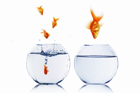 many gold fish together as symbol of teamwork Stock Photo - 13199220