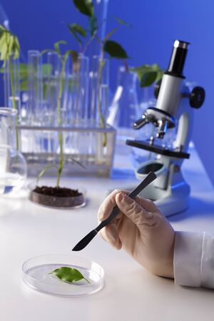 pipeptte: Green plants and scientific equipment in biology laborotary