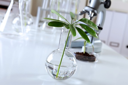 Green plants and scientific equipment in biology laborotary Stock Photo - 13247294
