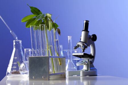 Green plants and scientific equipment in biology laborotary Stock Photo - 13383119