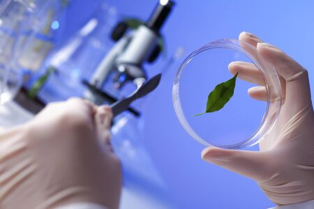 Green plants and scientific equipment in biology laborotary Stock Photo - 13382681