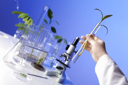 Green plants and scientific equipment in biology laborotary photo