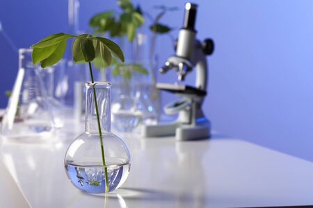 scientific equipment: Green plants and scientific equipment in biology laborotary