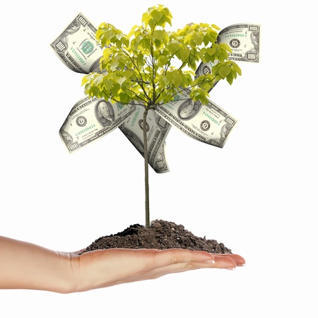 business protection: Money Tree with cuts on his hand of man. a symbol of financial success.