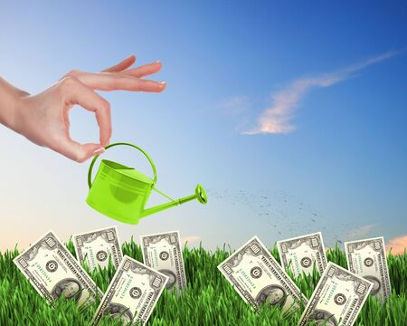 Human hand with a pot watering growing money tree photo