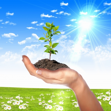 Hands holding green sprouts and sunny sky Stock Photo - 13956210