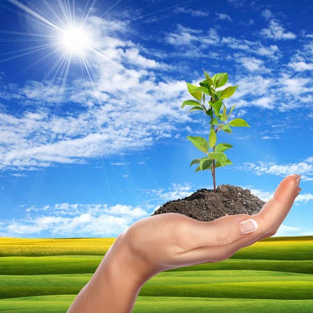 Hands holding green sprouts and sunny sky Stock Photo - 14134380