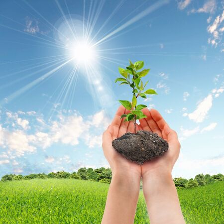 Hands holding green sprouts and sunny sky photo