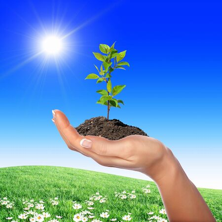 Hands holding green sprouts and sunny sky Stock Photo - 14184145