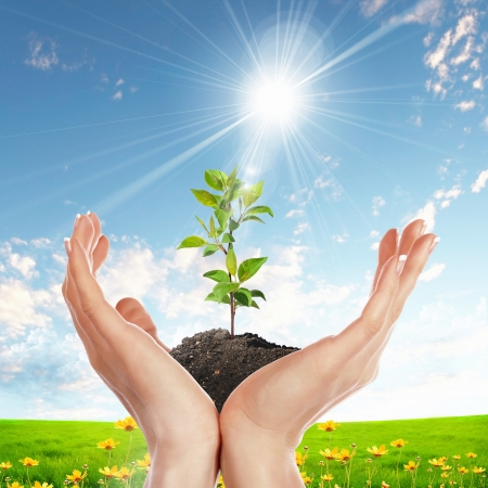 plants growing: Hands holding green sprouts and sunny sky
