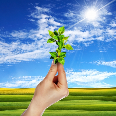 Hands holding green sprouts and sunny sky Stock Photo - 14501983