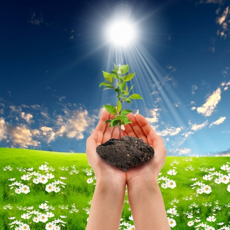 Hands holding green sprouts and sunny sky Stock Photo - 14502099