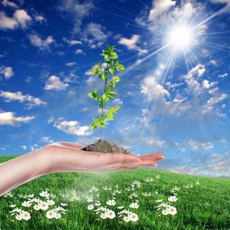 come�o: Mãos segurando brotos verdes e céu ensolarado