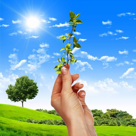 Hands holding green sprouts and sunny sky Stock Photo - 14850381