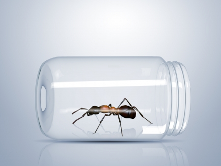 formicidae: Brown ant trapped inside a glass jar Stock Photo