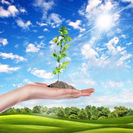 Hands holding green sprouts and sunny sky Stock Photo - 15008838