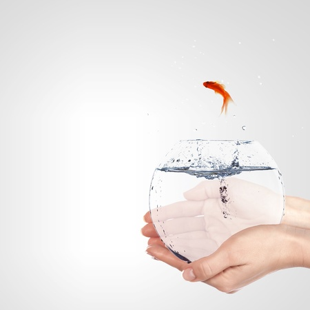 Illustration with goldfish in aquarium on white background illustration