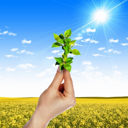 earth handful: Hands holding green sprouts and sunny sky