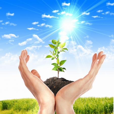 Hands holding green sprouts and sunny sky Stock Photo - 16318400
