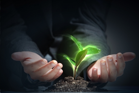 grow up: Business and ecology concept  Rising young green sprout