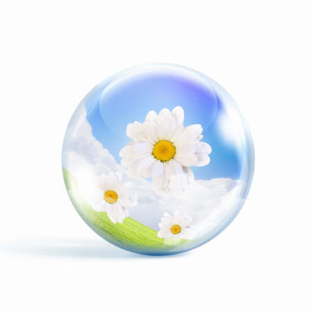bunch of fresh camomile flowers inside a glass sphere photo