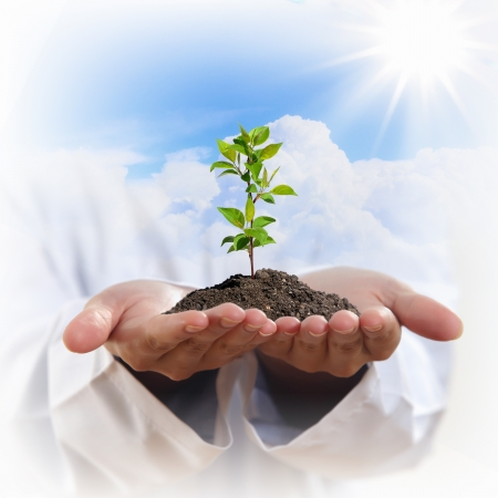 Hands holding a plant growing out of the ground, on white background close-up photo