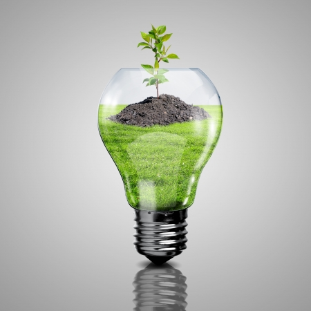 Electric light bulb and a plant inside it as symbol of green energy photo