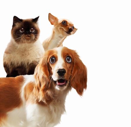puppy love: Tres animales dom�sticos en casa junto a la otra en un collage divertido fondo luz