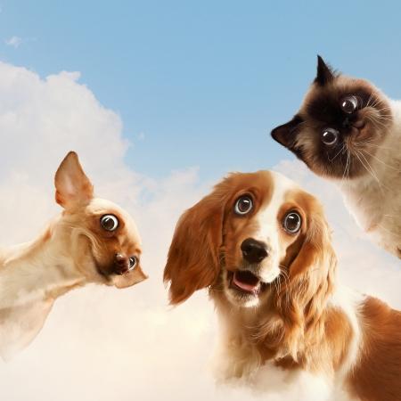 gato jugando: Tres animales dom�sticos en casa junto a la otra en un collage divertido fondo luz