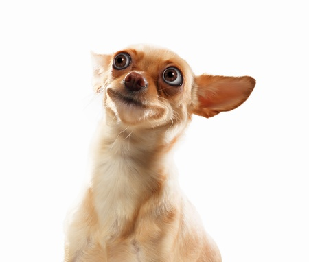 Portrait drôle de chien sur un fond clair Collage