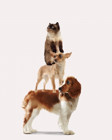 next to each other: Three home pets next to each other on a light background  funny collage