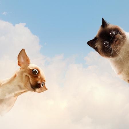 Deux animaux de compagnie � domicile c�t� de l'autre sur un fond clair collage dr�le