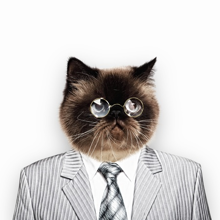 Funny fluffy cat in a business suit businessman  collage photo