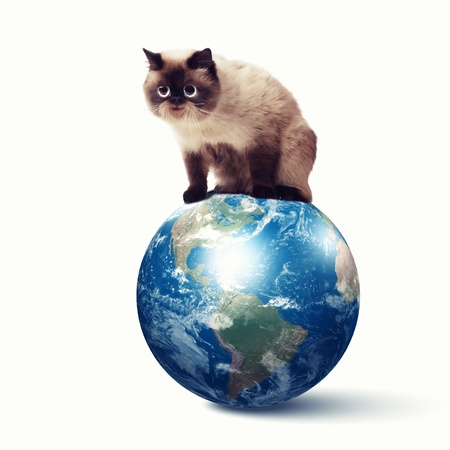 Gato divertido mullido contra los elementos de color Collage de fondo de esta imagen son proporcionados por la NASA photo