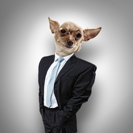 bull's eye: Funny portrait of a dog in a suit on an abstract background  Collage  Stock Photo