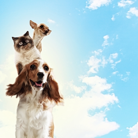 hound dog: Three home pets next to each other on a light background  funny collage