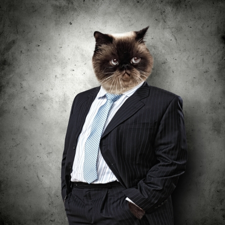 cute pussy: Funny fluffy cat in a business suit businessman  collage