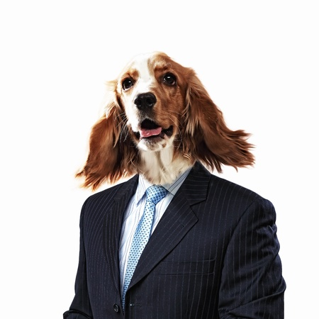 Funny portrait of a dog in a suit on an white background  Collage  photo